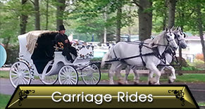 Horse Drawn Carriage, Baraat Horse Rentals, Pony Rides, Petting Zoo